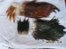 фрагменты птичьего меха, разноцветные куски выделанных шкур птиц