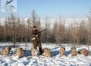 Фото чучела,фото охотничьи трофеи,фото таксодермия зверей, животных, птиц