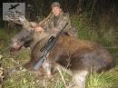 охотничьи трофеи,чучела животных-лось