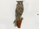чучело сова сидящая на ветке, таксодермия
